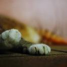 猫の手も借りたい猫の日
