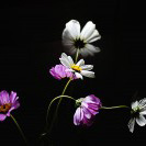枯れていく花
