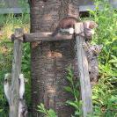 子猫たちの昼休み。