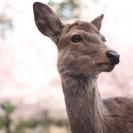 鹿パラダイス