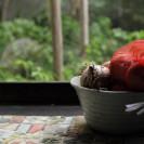 縁側の玉葱